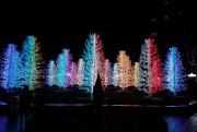 Winter Lights sasha trees © Memoirs Of A Metro Girl 2019