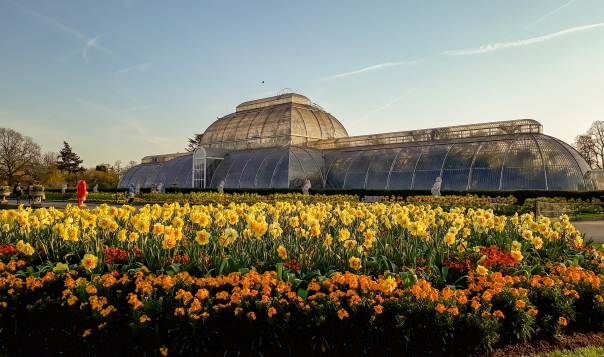 Kew Gardens Palm House daffodils © Memoirs Of A Metro Girl 2019