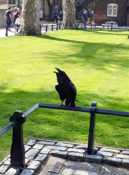 Tower of London Tour raven © Memoirs Of A Metro Girl 2019