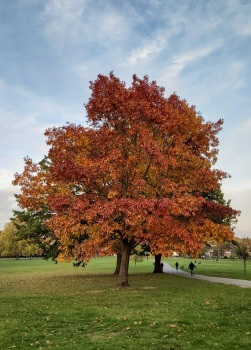 Autumn tree Brockwell Park © Memoirs Of A Metro Girl 2020